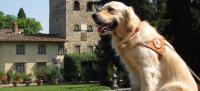 Un cane guida per ciechi
