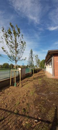 I nuovi alberi piantati alla Turziani